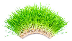 Green grass arch Royalty Free Stock Images