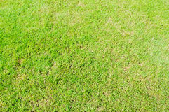 Green grass area Royalty Free Stock Image