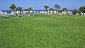 Green grass area at the beach side with palm, beach chair on lawn stock image