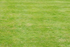 Green Grass. As a background Stock Photography