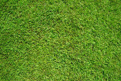 Green grass as background and texture Royalty Free Stock Images
