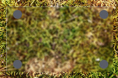 Green grass as blur background Stock Image