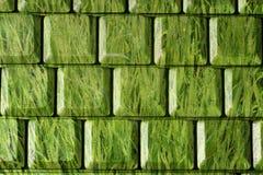 Green grass as a keyboard Stock Photo