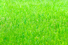 Green grass as texture Stock Photos