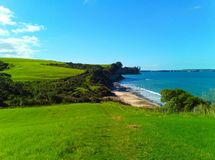 Green grass in auckland royalty free stock photo