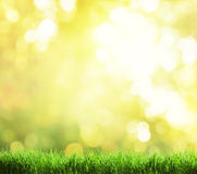 Green grass and autumn Royalty Free Stock Image