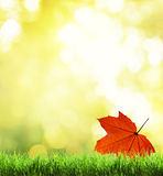 Green grass and autumn Stock Photo