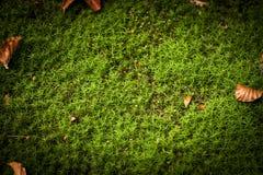 Green grass autumn background Stock Photos