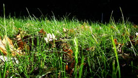 Green grass and autumn leaves Stock Image