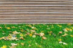 Green grass with autumn leaves and wooden background Royalty Free Stock Images