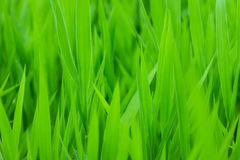 Green grass backgorund Stock Photography