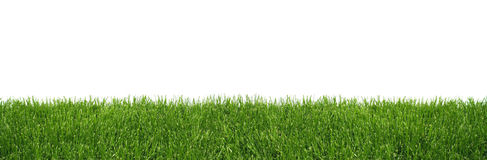 Green grass background. Wide green grass strip on white background isolated stock photo