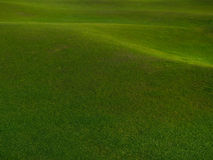 Green Grass background. Stock Images