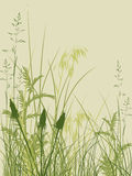 Green grass background. Background with green grass and flowers Royalty Free Stock Photo