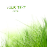 Green grass background. On a white background Stock Image