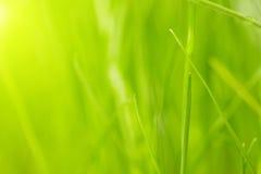 Green grass background. Fresh green grass background. macro shoot Stock Image