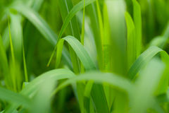 Green grass background. With shallow depth of field stock photos