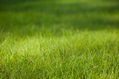 Green grass background. Coseup view tith bokeh for copy-space Stock Images