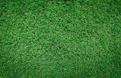 Green grass background. Beautiful fresh green grass background Stock Images