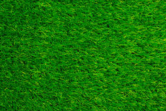Green grass background. Texture tilted royalty free stock image