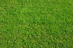 Green grass background. Abstract natural Royalty Free Stock Image