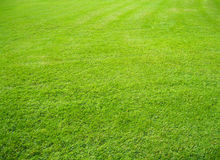 Green grass background. A lush green grass background Royalty Free Stock Photos
