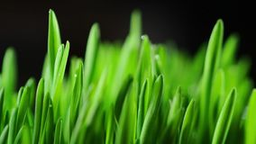 Green grass background stock video footage
