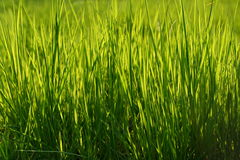 Green grass background. Background of blades of green grass Stock Images
