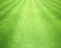 Green Grass Background Stock Photo