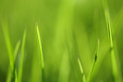 Green grass background. Shallow focus depth on front blades of grass stock photo