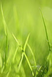 Green grass background. Shallow focus depth on front blades of grass stock image