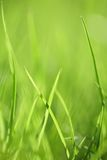Green grass background. Abstract green grass background. Shallow focus depth on front blades of grass stock photography