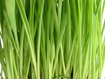 Green grass background Stock Image