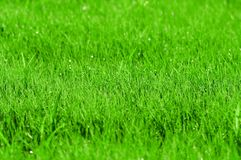 Green grass background. With shallow DOF Royalty Free Stock Image