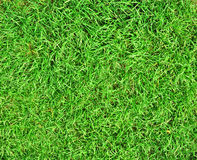 Green grass background. Green grass  (abstract photo, background Royalty Free Stock Photography