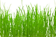 Green grass background. Green grass isolated over white royalty free stock photos