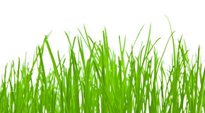 Green grass background. Green grass isolated over white Stock Images
