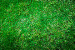 Green grass. For background. Abstract textures Stock Photos