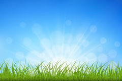 Green grass background Stock Photography