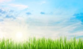 Green grass background. Art shine defocus decoration view day Royalty Free Stock Photos