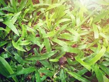 Green grass background. Artificial light was added on top right corner. Royalty Free Stock Images