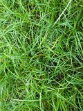 Green grass background Stock Photos