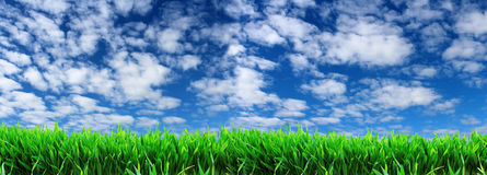 Green grass on a background of blue sky with white clouds. Royalty Free Stock Images