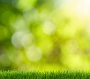 Green grass in the background boke Stock Images