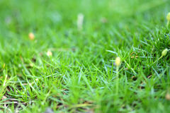 Green grass background close up Stock Images