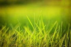 Green grass under the bright sun. Stock Photo