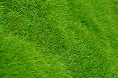 Green grass. Background of closeup shot on green grass Royalty Free Stock Photos