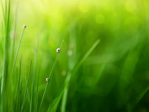 Green grass background with color bokeh Royalty Free Stock Images