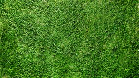 Background and texture of green grass field royalty free stock photography