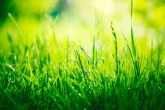 Green grass background with copy space. Green grass nature background with copy space royalty free stock image